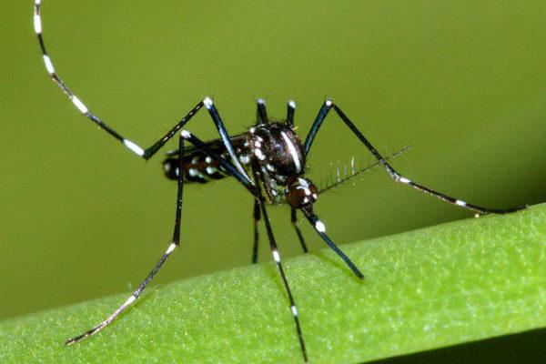 disinfestazione-zanzare-tigre-como-provincia