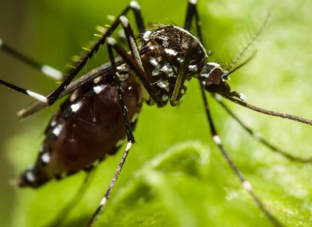 disinfestazione-zanzare-como-provincia