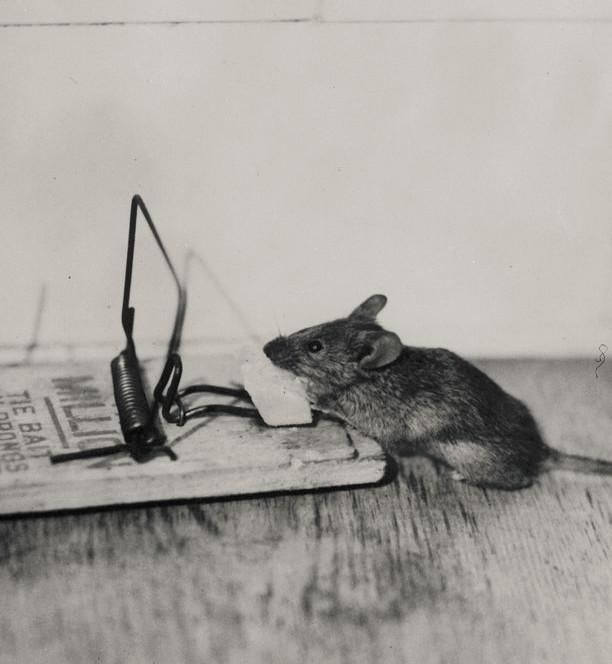 disinfestazione-topi-sicurezza-haccp